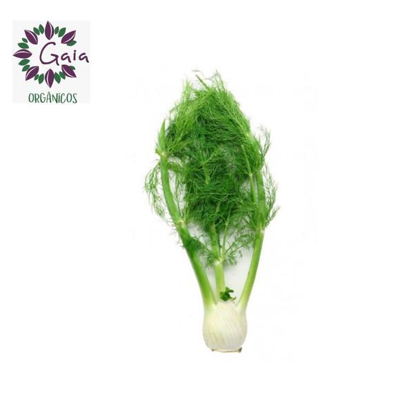 Funcho Orgânico (erva doce) - Maço / obs: pode vir com ou sem cabelo