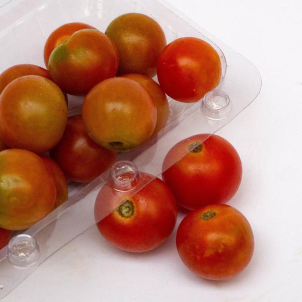 Tomatinho Orgânico (bdj)