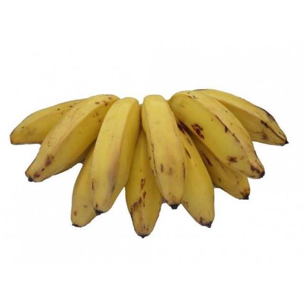 Banana maça orgânica KG - Podem vir verdes.