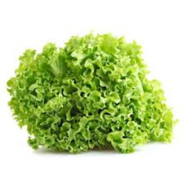 Alface crespa orgânica - unid.