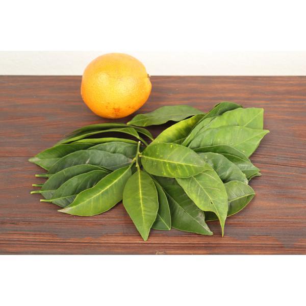 Folha de laranjeira ( maço) Orgânica