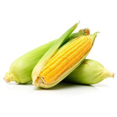 Milho verde agroecológico - 4 espigas