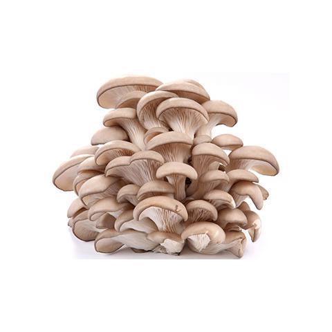 Cogumelo Shimeji