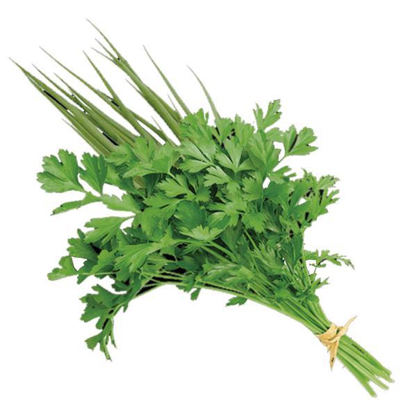 Cheiro Verde/coentro  (Maço)- Orgânico