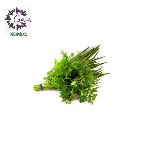 Cheiro Verde c/coentro Orgânico - Maço