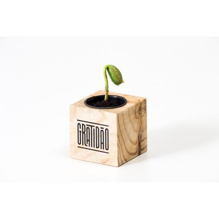 Broto ao cubo madeira - GRATIDÃO