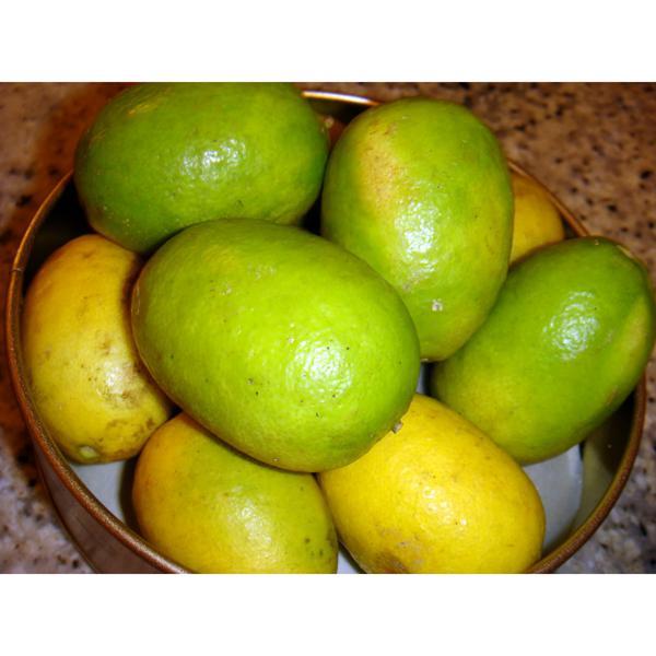 Limão Siciliano comprido (KG) - Orgânico