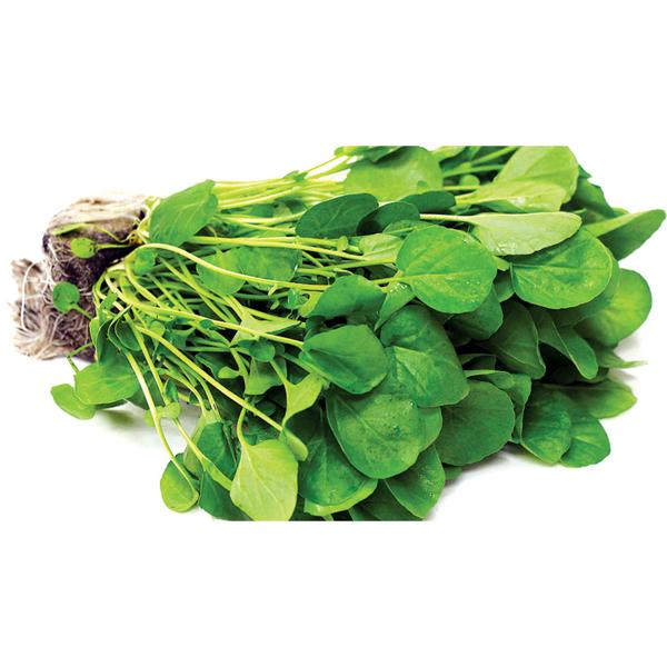 Alfa Verde Agrião Hidropônico