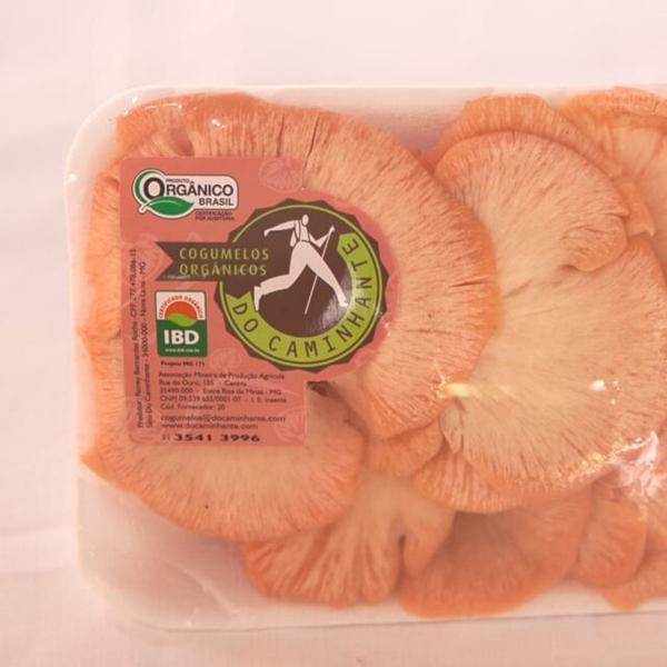 Cogumelo Salmão Orgânico 200g - DoCaminhante
