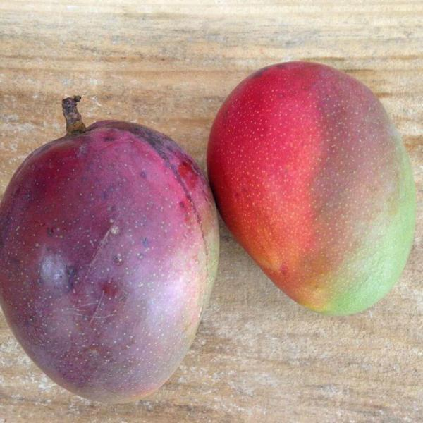 Manga palmer (kg)