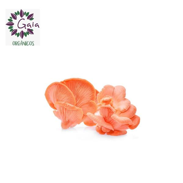 Cogumelo Shimeji Rosa Orgânico - Bandeja 150g