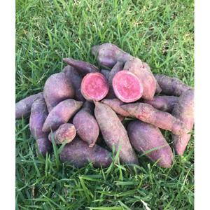 Batata doce polpa roxa (500g)