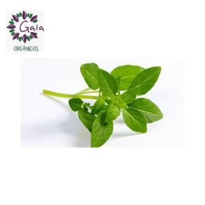 Manjericão Verde Orgânico - Maço