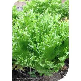 Alface Mini Frise Verde ( maço) orgânica