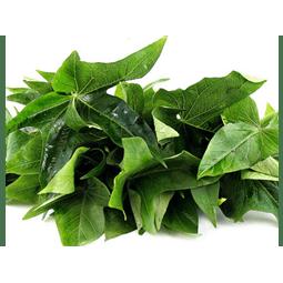 Folha de batata doce orgânica - Vista Alegre
