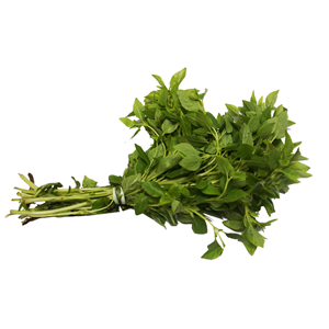 Manjericão Alfacava (O. basilicum)
