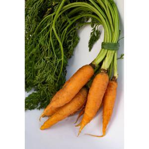 Cenoura Orgânica com Rama (molho)