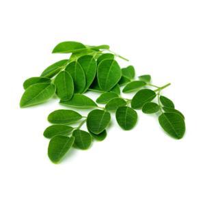 Moringa Oleifera Orgânica (maço)
