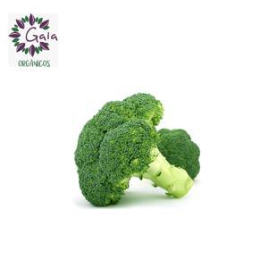 Brócolis Japonês Orgânico - Unidade