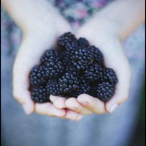 Amora Agroecológica Fresca (bdj)
