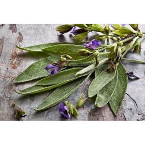 Salvia Orgânica Maço