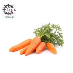 Cenoura Orgânica - Maço 1Kg