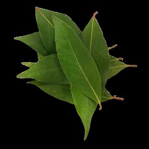 Louro (10 folhas)