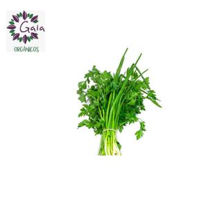 Cheiro Verde c/salsa Orgânico - Maço