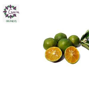 Limão Cravo Orgânico - Bandeja com 6 unidades