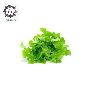 Alface Mimosa Orgânico - Maço
