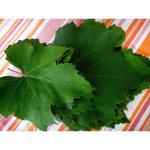 Folhas de uva (10 unidades)