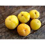 Cagaita 250g fruto do cerrado