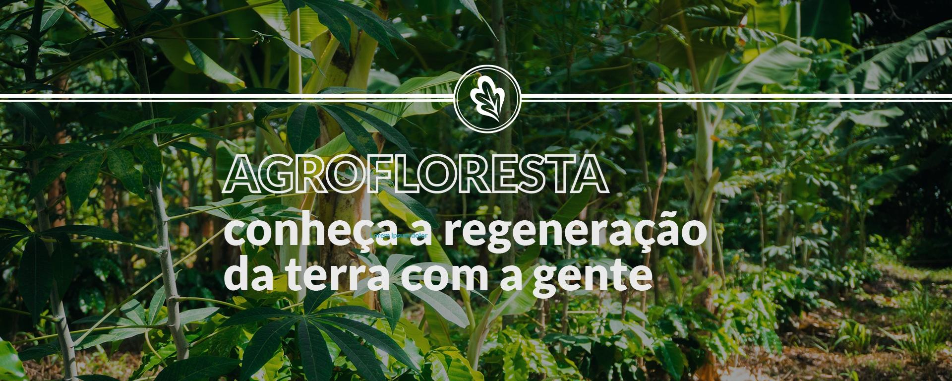 agrofloresta site